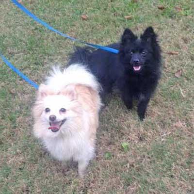 dog_yasha&fivel1114