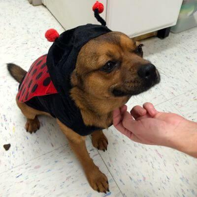 dog_zuma_ladybug