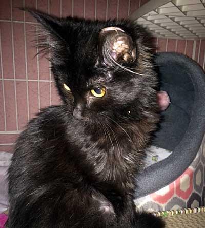 adopt a kitten ri