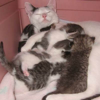 A mother cat feeding her kittens
