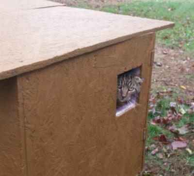feral cat shelter plans animal welfare society aws west kennebunk maine animal welfare society