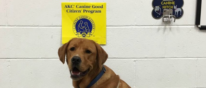 Canine Good Citizen and Social Skill: March 26 - May 7