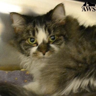 Kennebunk Animal Shelter Cats