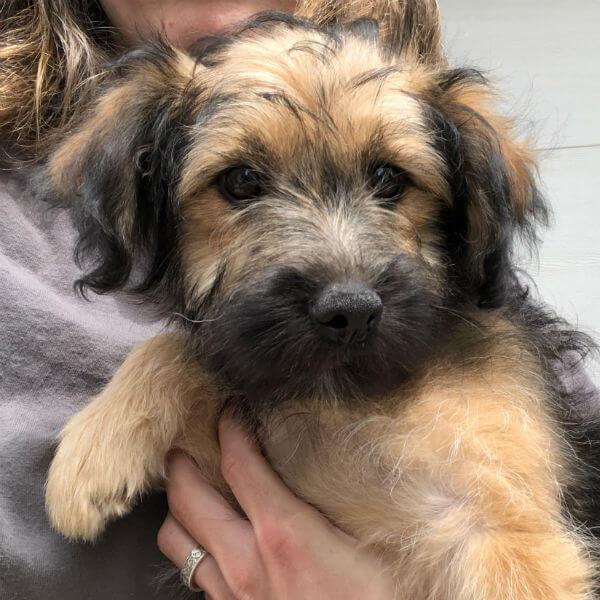 Brooklyn – Adopted 07/19 | Animal Welfare Society